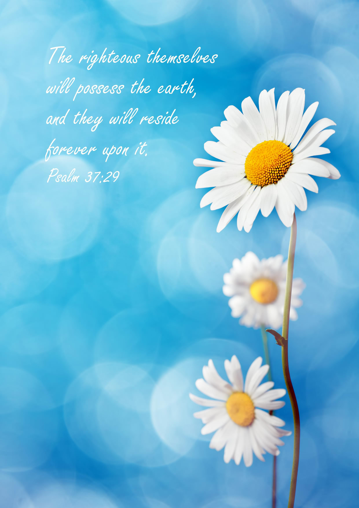 Greeting Card Paradise Jehovahs Witness Theocratic Ministry