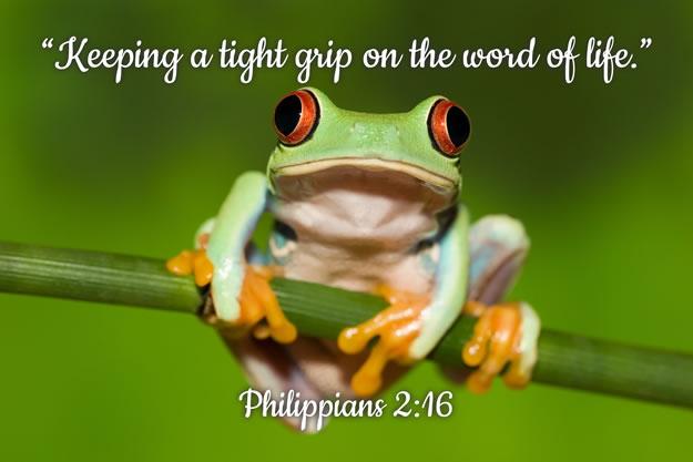 FRIDGE MAGNET - Cute Frog - Phil 2:16