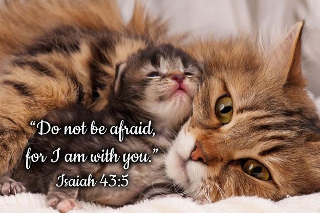 FRIDGE MAGNET - Cat and Kitten - Isaiah 43:5